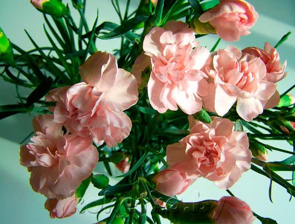 Цветы которые стоят дольше всего