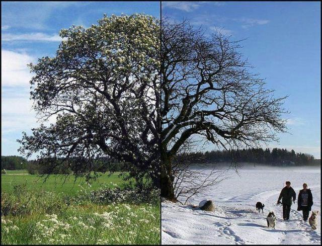 Зима лето 2