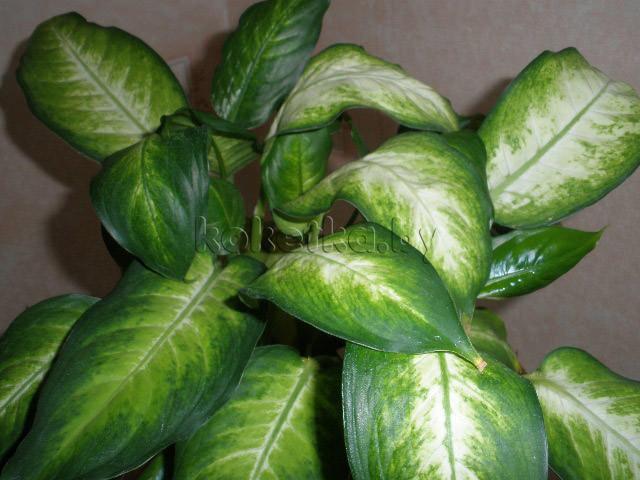 Сорняки  floribundaru