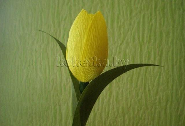 Тюльпан из креповой бумаги. Мастер класс