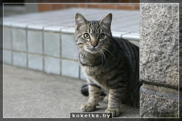 Взяли котенка с улицы что надо сделать