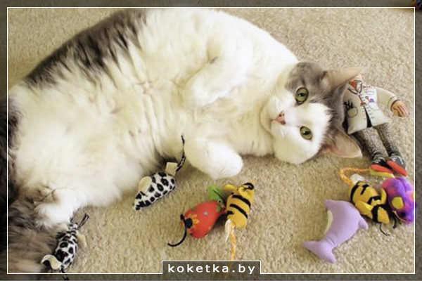 Пусть у кота будут игрушки - с ними веселее