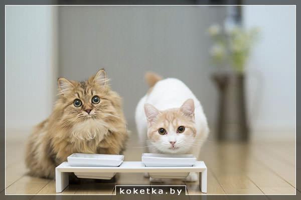 Котики кушают