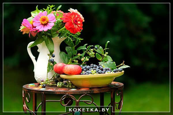Семена цветов для сада и названиями