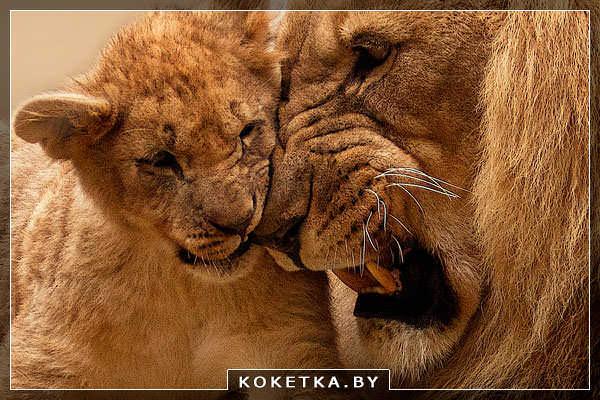 Сексуальнность жннщины лев