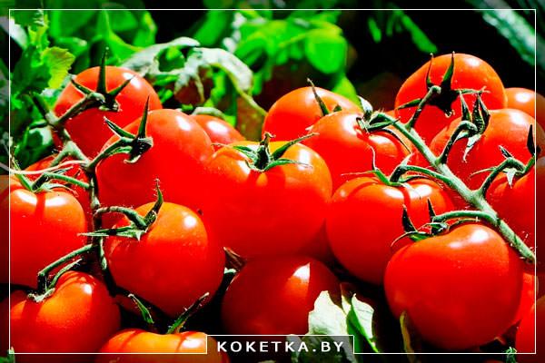Помидоры - Польза томатного сока